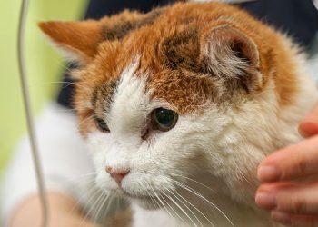 Das Thema Entwurmung/Verwurmung bei Katzen