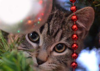 Tipps für sichere Weihnachten mit ihren Haustieren